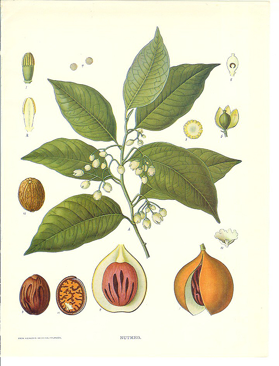 Prettier stuff (botanical prints), Honest Fare by Gabrielle Arnold