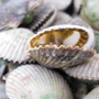Scalloping in Homosassa Bay, Honest Fare by Gabrielle Arnold