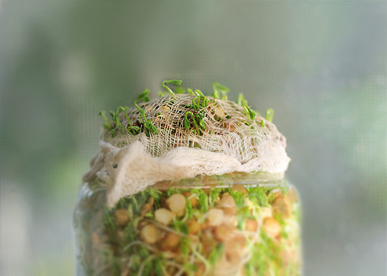 Windowsill Sprouting my way through the Winter., Honest Fare by Gabrielle Arnold