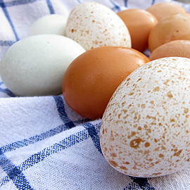 Farm fresh eggs and how to tell when they're not, Honest Fare by Gabrielle Arnold