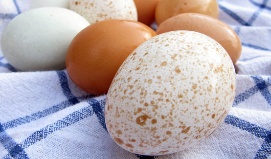 Farm Fresh Eggs And How To Tell When They Re Not Honest Fare